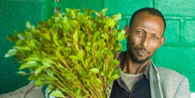 Khat (also commonly referenced to as qat, qaad, gat, jaad, tchat, and miraa) is a small leafy plant. Among communities in the Horn of Africa and the Arabian Peninsula, the chewing of khat is a social custom dating back many thousands of years.